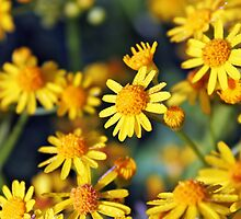 Yellow Joy by debidabble