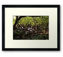 Tranquil Serenity Framed Print