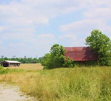 OLD BARN OUTSIDE MEMPHIS, INDIANA by Pauline Evans