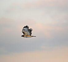 Take Flight by Bree Waltman