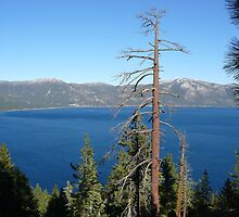 Trees Overlooking Tahoe by Chad Burrall