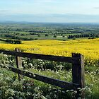 Fields of Gold by Simon Brown