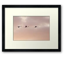 Migrant Geese, Gedser, Denmark, HDR Framed Print