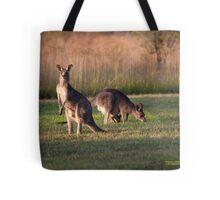 Kangaroos and baby Joey grazing at Vacy, NSW Australia Tote Bag