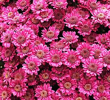 Pink Chrysanthemums by Ludwig Wagner
