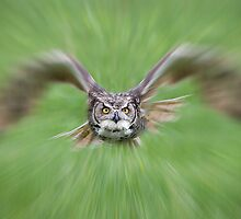Owl on the Prowl by faczen