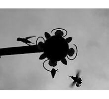 Hummingbirds #2 Photographic Print