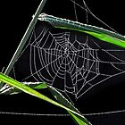 Web and Webster With Dew by Noble Upchurch