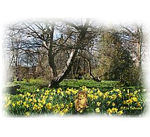 Going daft in the Daffodils Photographic Print