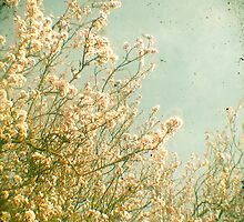 Spring by Cassia