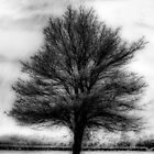 Abstract Tree Orton by StephenRphoto