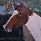 White and Brown Horse at Fence by towncrier