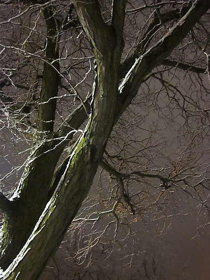 Fading Into The Winter's Night by Guy Ricketts
