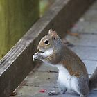 Squirrel by Scott Dovey