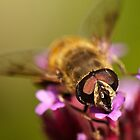 Bee Close up by Joanne Rinaldi