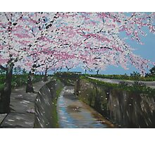 Japanese cherry blossom - painted from a series of photos from Japan Photographic Print