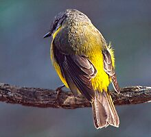 Feathered Friend by John Sharp