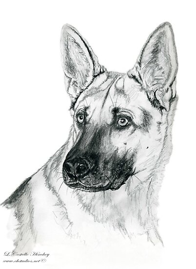 German Shepherd 2 by Linda Costello Hinchey