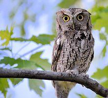 Wise Old Owl by LynyrdSky
