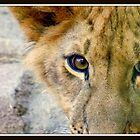 Lion Eyes by RdwnggrlDesigns