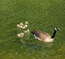 Following Mommy by MarianBendeth