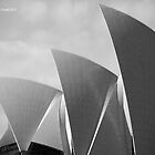 Sydney Opera House Shells by Darren Freak