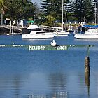 Pelican Perch - Yamba NSW. by lib225