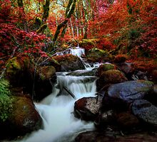 Red Is A Color by Charles & Patricia   Harkins ~ Picture Oregon