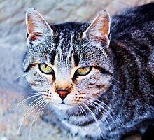 CAT by dedakota