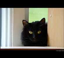 Felis Catus - Black Female Turkish Angora Cat Hiding Behind Bookshelves by © Sophie Smith