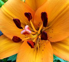 Orange Lily by James Brotherton