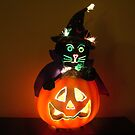 Halloween Cat by bethscherm