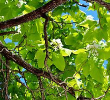Green Leaf Tree by Cynthia48