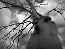 Scary Tree- Strathalbyn by Ben Loveday