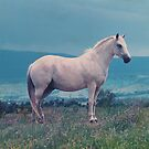 White Horse by Sandy1949