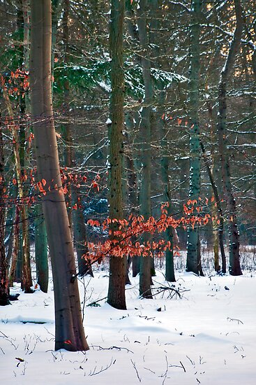 Trees In Winter by Salwa Afef