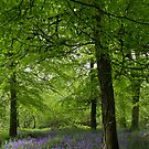 The Bluebell Wood by Deb Maidment