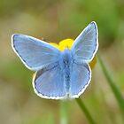 Beautiful Blue by Steve Green