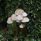 small Fungi by LynneJ
