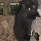 Kitten -(090613)- Digital photo/Fujifilm FinePix AX350 by paulramnora