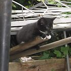 Kitten III -(090613)- Digital photo/Fujifilm FinePix AX350 by paulramnora