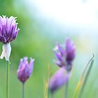 Chives by Heather Thorsen