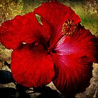 Deep Red Hibiscus by Ginger  Barritt
