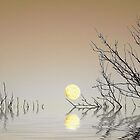 A Moon on the Water by David Harnetty