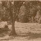 Cemetery Pond  by Stephanie Fay