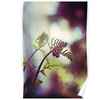 new growth - cinnamon fern Poster