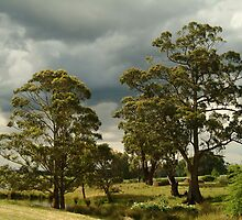 Joe Mortelliti Gallery - Braeside farm, Clarke's Hill, near Ballarat, Victoria, Australia. by thisisaustralia