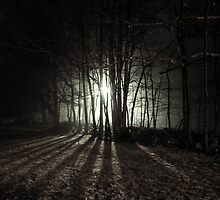 Nocturnal Luminescence by Tyler Boucher