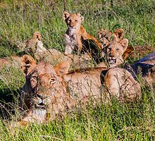 Family Pride by Fiona Ayerst