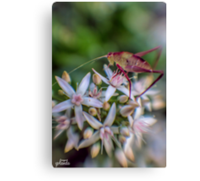 Grasshopper on Flowers Canvas Print